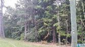 SUNSET DR, PELL CITY, AL 35128 - Image 1