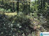 310 WARRIOR RIVER HIGHLANDS RD Lot One, ADGER, AL 35006 - Image 1
