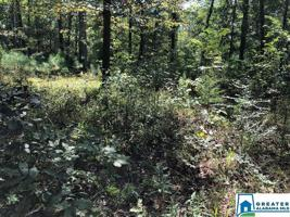 310 WARRIOR RIVER HIGHLANDS RD Lot One Property Photo