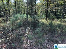 334 WARRIOR RIVER HIGHLANDS ROAD Lot 1.6 Arces Property Photos