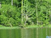 Lot 13 EAGLE MOUNTAIN DR, ROCKFORD, AL 35136 - Image 1