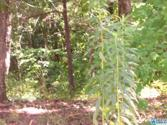 MOUNTAIN WOODS LAKE RD Lot 3.8 ACRES, HAYDEN, AL 35180 - Image 1