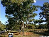 PINE HARBOR RD, PELL CITY, AL 35128 - Image 1