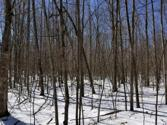 Lot 985 RED FOX RUN, Farwell, MI 48622 - Image 1