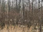106 KING RICHARDS, Gladwin, MI 48624 - Image 1: Wooded Building or Camping Lot
