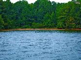 TBD WINDJAMMER Road, Blair, SC 29015 - Image 1