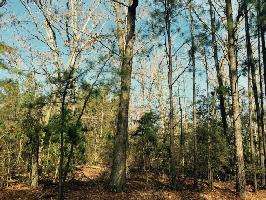 0 GOLD NUGGET TRAIL Lot 5, Saluda, SC 29127 Property Photo