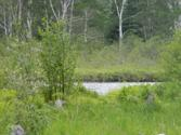 0000 S Riverrun Dr. Lot 49, Trout Lake, MI 49793 - Image 1: River Frontage