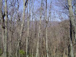 4507 Sassafras Mountain Trail Lot 4507, Jasper, GA 30143 Property Photo