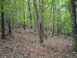 4136 Partlow Court Lot 4136, Jasper, GA 30143 Property Photo