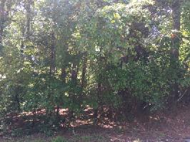 Lot 21 Pine Forest Circle Lot 21 Property Photos