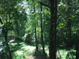 5451 Pine Forest Road Lot 23 Property Photos