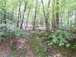 4531 Sassafras Mountain Trail Lot 4531, Jasper, GA 30143 Property Photo