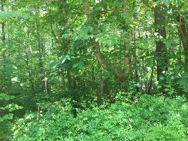 0 Normandy Trl, Lavonia, GA 30553 Property Photo