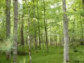 ON GREAT NORTHERN TR Lot Lot 19, Mercer, WI 54547 - Image 1