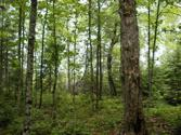 ON GREAT NORTHERN TR Lot Lot 20, Mercer, WI 54547 - Image 1