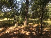 Lot 358 Zebra Crossing, LARUE, TX 75770 - Image 1: Main View