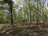 Lot 186 Scenic Lakeview Drive, Spring City, TN 37381 - Image 1: 1