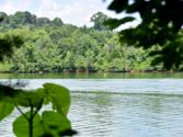 Williams Bend Rd, Knoxville, TN 37932 - Image 1: Williams Bend