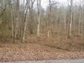 134 Ac +/- Sherwood Shores/Lucknow Rd, Spring City, TN 37381 - Image 1: 1