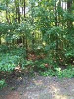 Lot 2 Vintage L COSBY CIRCLE, Greensboro, GA 30642 Property Photo