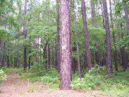 1020 INVERNESS DRIVE Lot 3, Greensboro, GA 30642 Property Photos