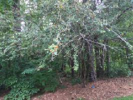 0 WINDING RIVER ROAD Lot 78, Eatonton, GA 31024 Property Photo