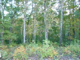 Lot 26 Sawmill Cove Rd 26, Rockwood, TN 37854 Property Photos
