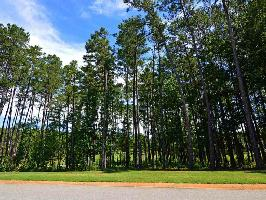 2040 ARMORS FORD Lot 33, Greensboro, GA 30642 Property Photo