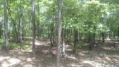 Lot 29 Stagecoach Rd, Dadeville, AL 36853 - Image 1: IMG_20170806_141703930