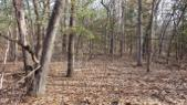 Lot 48 Wintergreen Road, Allegan, MI 49010 - Image 1: 20170216_101733