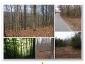 63 .81 Ac. Wright Bend Road, Smithville, TN 37166 - Image 1