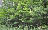 LT 76 CAMPBELL COVE RD, Copperhill, TN 37317 - Image 1