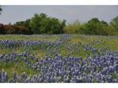 9212 Hidden Lakes Court Lot 672, Grand Prairie, TX 75104 - Image 1: Springtime in Texas this side yard is covered in wild flowers