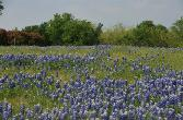 9212 Hidden Lakes Lot 672, Grand Prairie, TX 75104 - Image 1: This relatively level lot is stunning in the spring with a blanket of bluebonnets.