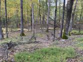 Parkers Glen and Pond Rd, Shohola, PA 18458 - Image 1: Beautifully wooded[3152]