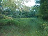 , Lake Ariel, PA 18436 - Image 1: Clearing where to build home