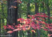 Lot 3 Prescott Rd, White Haven, PA 18661 - Image 1: Fall leaves