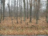 125 King Arthur Road, Blakeslee, PA 18610 - Image 1: Lot View 1