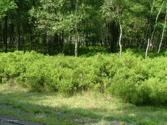 #35 FOREST HILL DR, Blakeslee, PA 18610 - Image 1: Street View