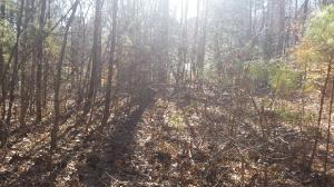 Lot 85 Country Blvd Property Photo