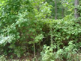 Lot 41 Dildy Circle, Littleton, NC 27850 Property Photo