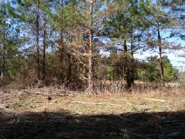 Lot 28 N. Brown Road, Littleton, NC 27850 Property Photo
