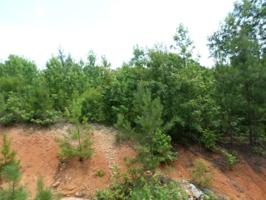 Lot 19 Canoe Creek Road, Gaston, NC 27832 Property Photos