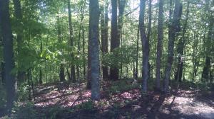 Lot 24 Old Mill DR, Hardy, VA 24101 Property Photo