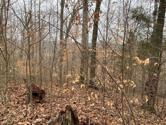 Lot 51 Griffin Trail, Albany, KY 42602 - Image 1: Griffin Trail 50,51