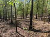 Tbd County Road 9300, West Plains, MO 65775 - Image 1: 1