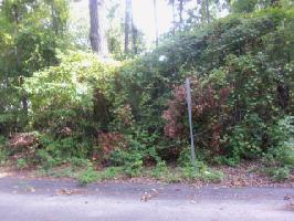 LOT#25 SECOND STREET, Santee, SC 29142 Property Photo
