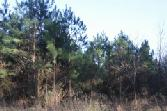 00 Co. Rd. 2139, Burkeville, TX 75932 - Image 1