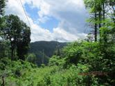 Tbd Heaton Branch Rd., Butler, TN 37640 - Image 1: Great View